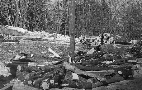 Der Holzstoss zum Fasnachtsfeuer wird aufgeschichtet (Foto: P. Brodmann-Kron)