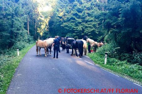 © FOTOKERSCHI.AT/Freiwillige Feuerwehr Florian