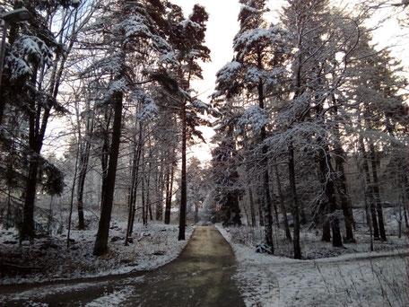 Finnischer Wald bei Helsinki