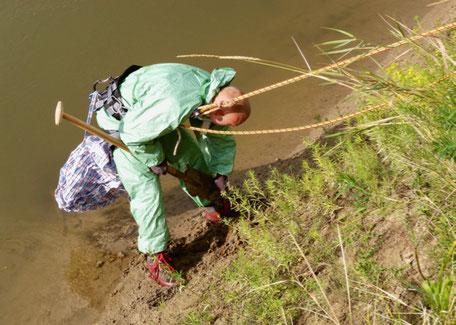Arrachage de l'Euphorbe fausse-baguette (plante invasive) en berge de l'Oise