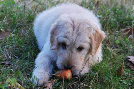 Veganes Hundefutter