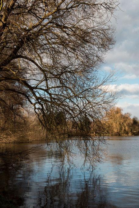Trauerweide am See mit Spiegelung