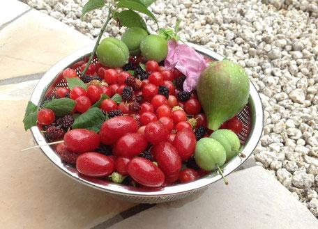 グミ、ユスラウメ、桑の実、梅、いちじくの酵素