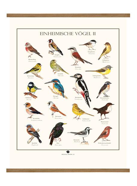 Vogellehrtafel, Vogelillustration, Vogelzeichnung, Vintage, Poster