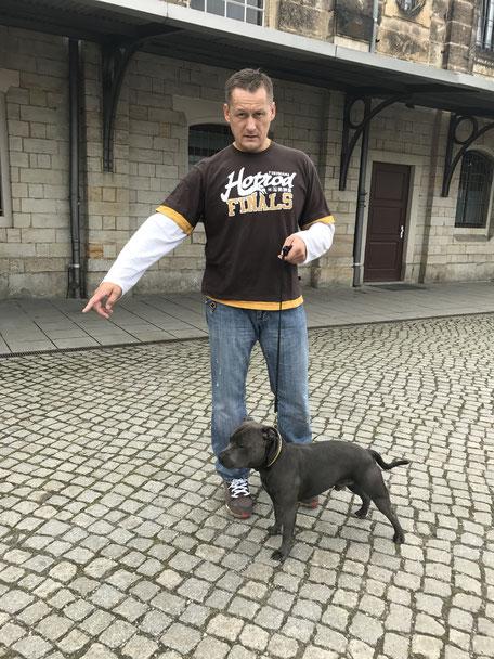 Hundeasustellung Dresden
