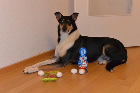 Foto: Blade liegt auf dem Fußboden, vor ihm stehen ein Schokohase, 4 Eier und eine Tüte Hundeleckerli