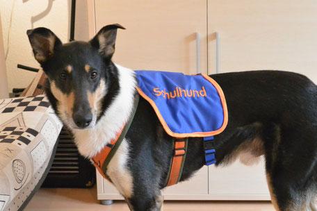 """Blade trägt eine blaue Kenndecke mit der orangefarbenen Aufschrift """"Schulhund""""."""