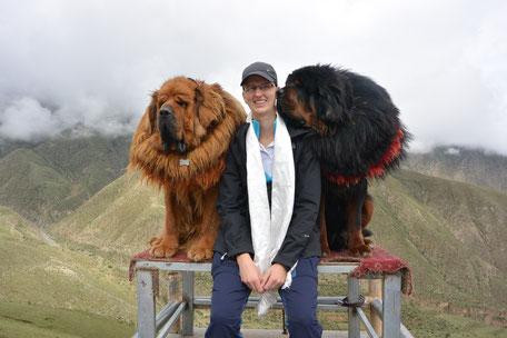 Frauchen sitzt in Tibet auf einem Podest zwischen zwei riesigen tibetischen Mastiffs, das sind sehr sehr große Hunde mit langem Fell. Der eine ist braun und schaut nach vorn, der andere ist schwarz und schnuppert Frauchen am Gesicht.  Berge im Hintergrund