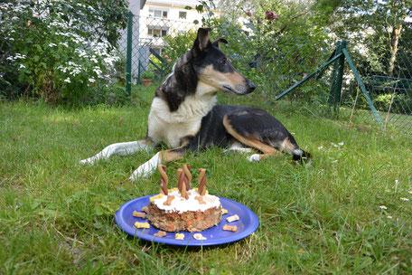 """Blade liegt auf dem Rasen, vor ihm steht ein blauer Teller mit einer Torte aus Hackfleisch, in der vier Kaustangen als """"Kerzen"""" stecken."""