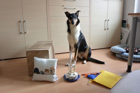 Blade sitzt auf dem Boden, vor ihm eine kleine Torte mit drei Kaustangen als Kerzen, ein großer gelber Umschlag, aus dem etwas Blaues herausschaut, ein Kissen und eine große Pappkiste.