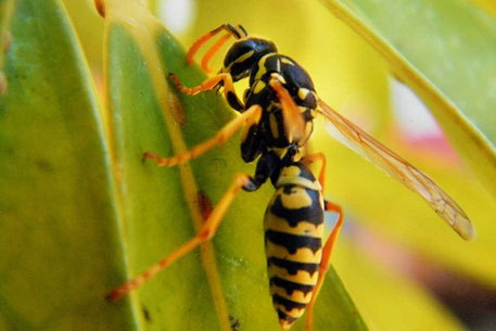 vliegenramen op maat tegen insecten