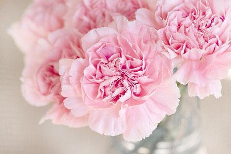 Rosa Nelken zur Trauung