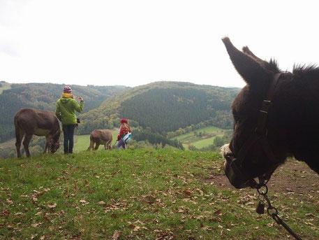 Eselwanderung Boulaide 13.10.13