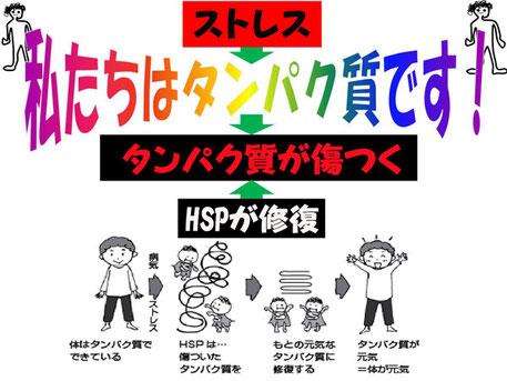 HSPが傷ついたタンパク質を修復して体が元気に