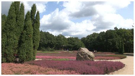 Lüneburger Heide Schneverdingen Heidegarten