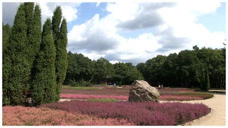 Heidegarten im Schneverdinger Höpen
