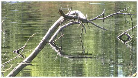 Pietzmoor Schneverdingen unveränderte Natur
