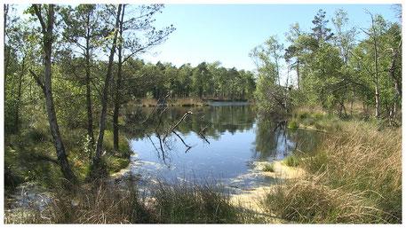 Pietzmoor Schneverdingen Lüneburger Heide