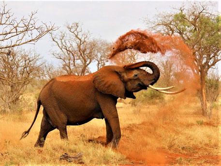 Big 5 Tiere Afrika - Elefant in Südafrika