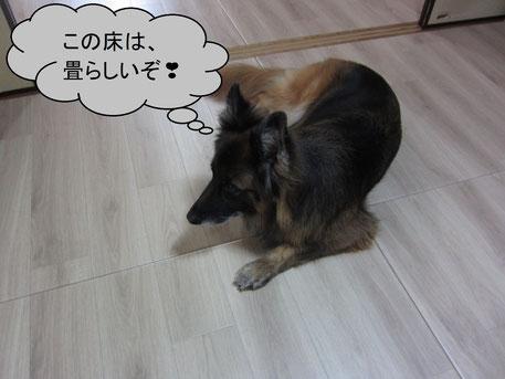 ワンちゃんが遊ぶお部屋の畳を畳でリフォーム!これが「リフォーム畳®」です。
