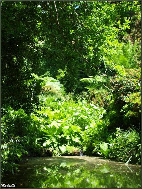 La végétation du Petit Etang au bas de la Cascade - Les Jardins du Kerdalo à Trédarzec, Côtes d'Armor (22)