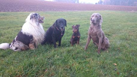 Hundeschule Frankentanne - dann klappt´s auch mit dem Terrier