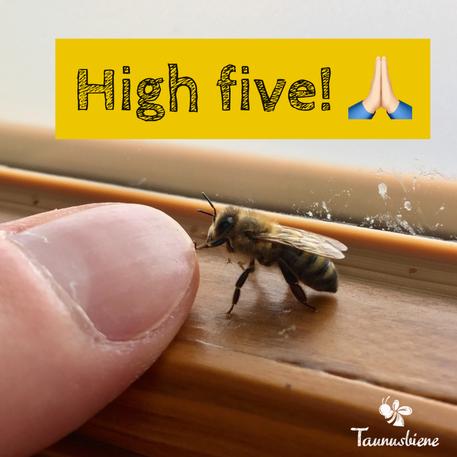 High five zur Taunusbiene!
