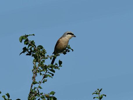 Auf Bild klicken um weitere Vögel im Naturschutzgebiet Ludfwigsquelle zu sehen