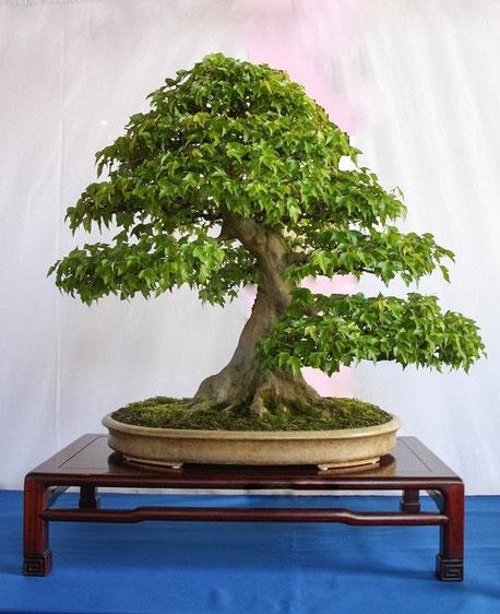 Der gleiche Baum noch einmal von Nahem