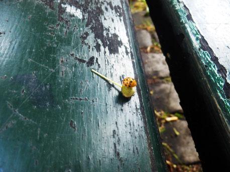 ひと休みしたベンチにオレンジのてんとう虫。忙しくてこういう事に気づける余裕がなかったかもしれません。