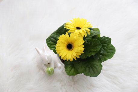 春の花たち。ガーベラ、カーネーション、スイトピー。