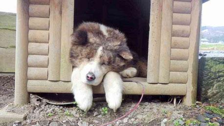 犬のお留守番写真