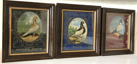 Three Scottish Racing Pidgeon Awards 1890's