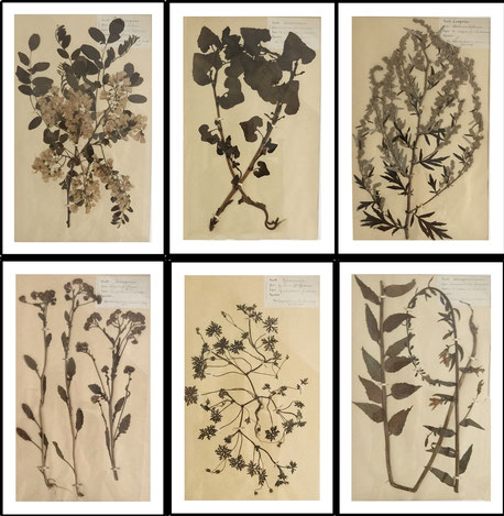 Herbarium, pressed wild flowers botanical, Set of 6 large size French Herbier Folk Art 1890's