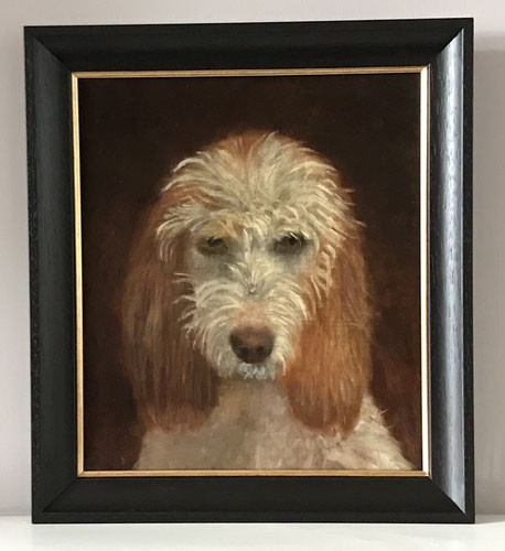 French Basset Griffon dog