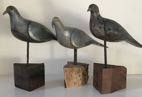 three good english decoy pigeons