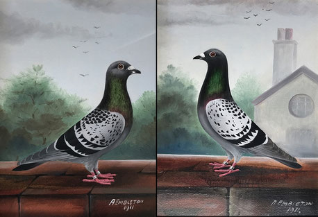 A Embleton, a pair of prize winning racing pigeons folk art, dated 1911