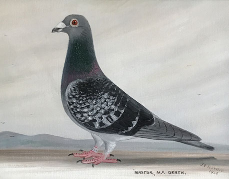 J Browne, Portrait of a racing pigeon 1925 Master McGrath