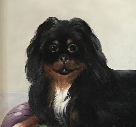 Spaniel seated on a cushion