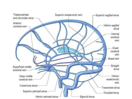dural venous sinuses overview