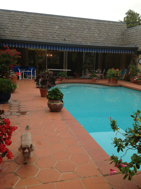 サンディエゴ バスティン先生宅の中庭