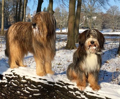 Wäller im Schnee -