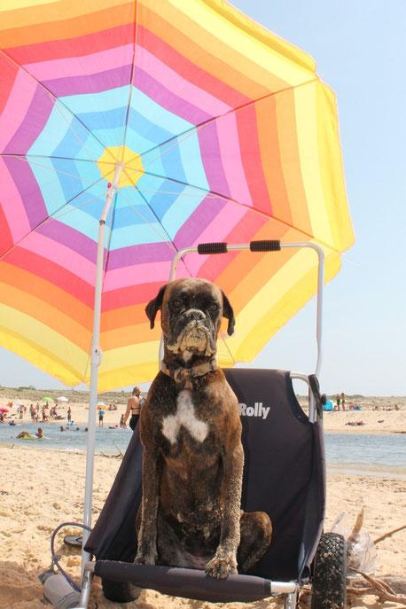 So anstrengend  ist mein Hundeleben : diese pralle Sonne , diese Wellen , dieser Sand !