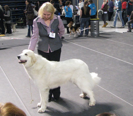 Bella 15 months old CACIB & BOB in Tallinn Winner 2013