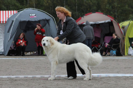 Bella 10 months old winning CAC in Finland Speciality show and BF2nd
