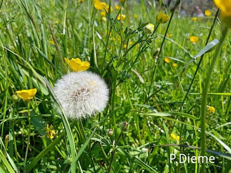 Pollen,-Allergie,-Heuschnupfen