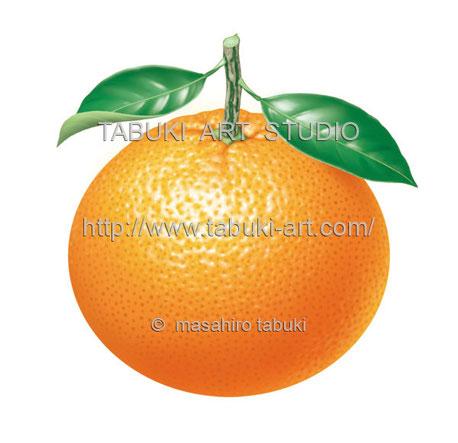 オレンジ、カットオレンジのイラスト フルーツイラスト fruit illustration