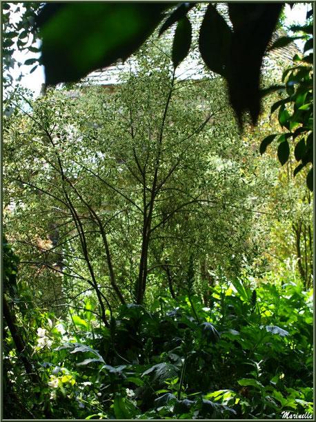 Les Terrasses et le Manoir à travers la végétaton - Les Jardins du Kerdalo à Trédarzec, Côtes d'Armor (22)