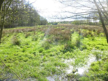 Hainholz Feuchtwiesen im Frühjahr