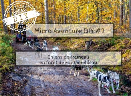 Guide micro-aventure-Chiens de traineau- Fontainebleau